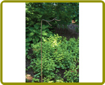 Metal Twig Stake Small