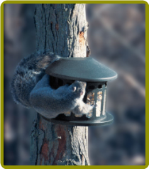Squirrel Diner™ 2 Metal Squirrel Feeders