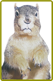 """Mugshot Squirrel"" Display"