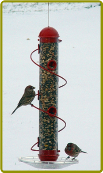 Red Spiral Sunflower Feeder 17in.
