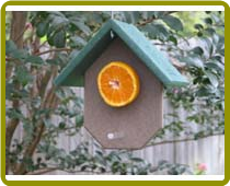 Recycled Fruit Feeder-Hunter Green