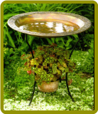 Bird Baths & Fountains