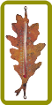 Oak Leaf Nature Thermometer