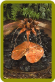 Copper Dripper/Fountain Lotus