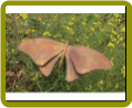 Butterfly Staked Flamed Copper