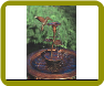 Hummingbird Copper Dripper/Fountain