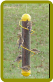 Yellow Spiral Finch Tube 17in.