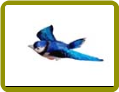 Blue Jay Window Magnet