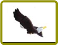 Eagle Window Magnet