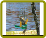 Porch Swing Squirrel Feeder