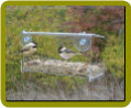 Clear View Open Diner Window Feeder