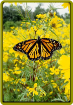 Tips on How To Make Your Backyard A Butterfly Haven!