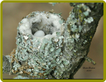 Tips to Attracting Nesting Birds To Your Backyard!